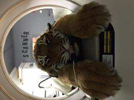 Un tigre au scanner !